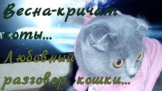#Кричат коты ~ кошки съезжают с катушек. Любовный разговор кошки. Love the talking cats.