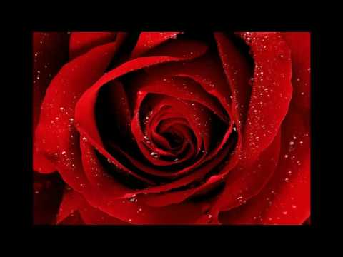 Gheorghe Zamfir-Die Rose