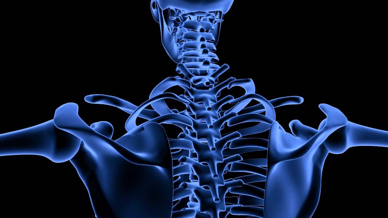 Royalty Free Medical Human Skeleton System Hd Footage Shoulder