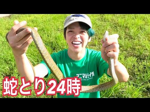 爬虫類ハンタータイガ24時間蛇とりチャレンジ!!!