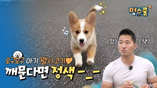 Act seriously when dogs bite-_-!!!│Kang Hyung Wook's Beginner Pet Parents in Mung School