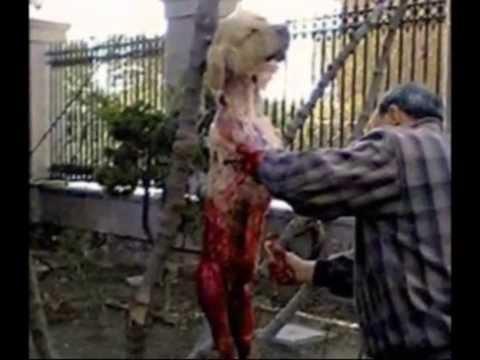 Image result for images of yulin dog meat festival