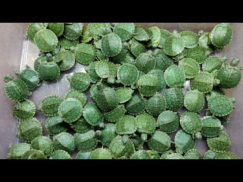 First Turtle Shop In India