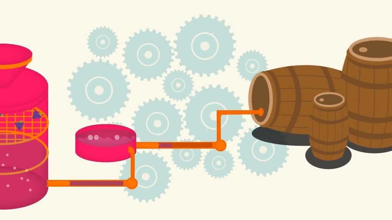 Circuito Productivo Del Vino : Producción del vino youtube
