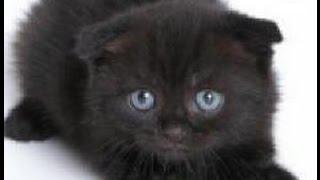 Смешной черный котенок весело играется в постели хозяина!