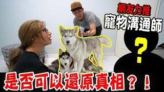 【狗狗真相】找來網友力推寵物溝通師,真的可以還原真相?結果....(Jeff & Inthira)