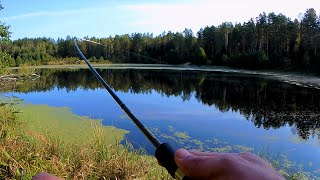 Отводной поводок лучшая оснастка для ловли окуня Рыбалка на лесном озере