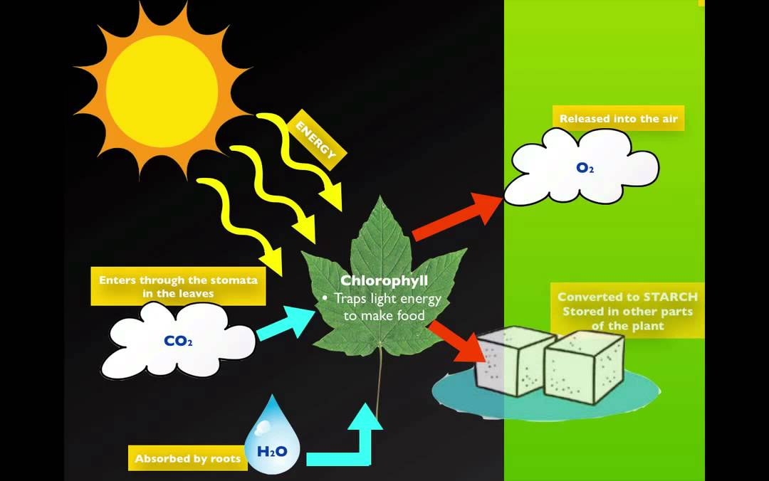 Photosynthesis respiration youtube ccuart Choice Image