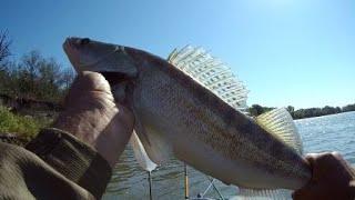 Судак на Кильку Река дон 10 сентября Осенняя рыбалка