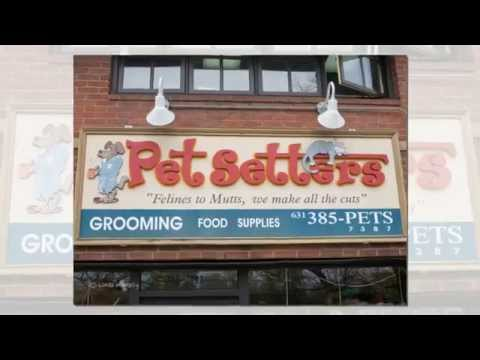 PetSetters Dog Grooming   Chloe And Bella Get A New Look