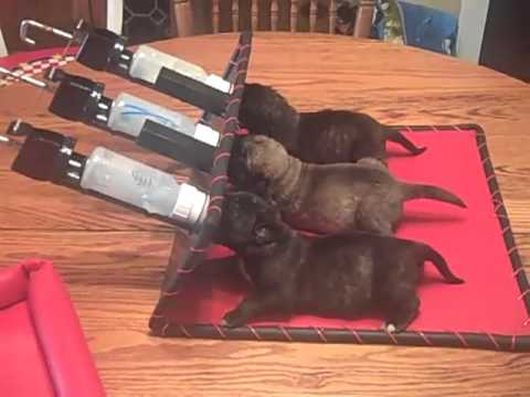 pet nursing station   youtube