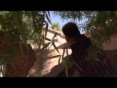 Property Wars Desert Castle Full Episode