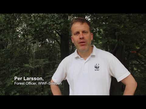 WWF and IKEA partnership for change | Per Larsson, WWF Sweden