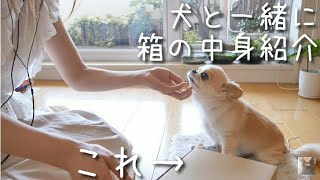 ASMR 箱の中身紹介/犬の咀嚼音/微かな囁き/Japanese Whisper