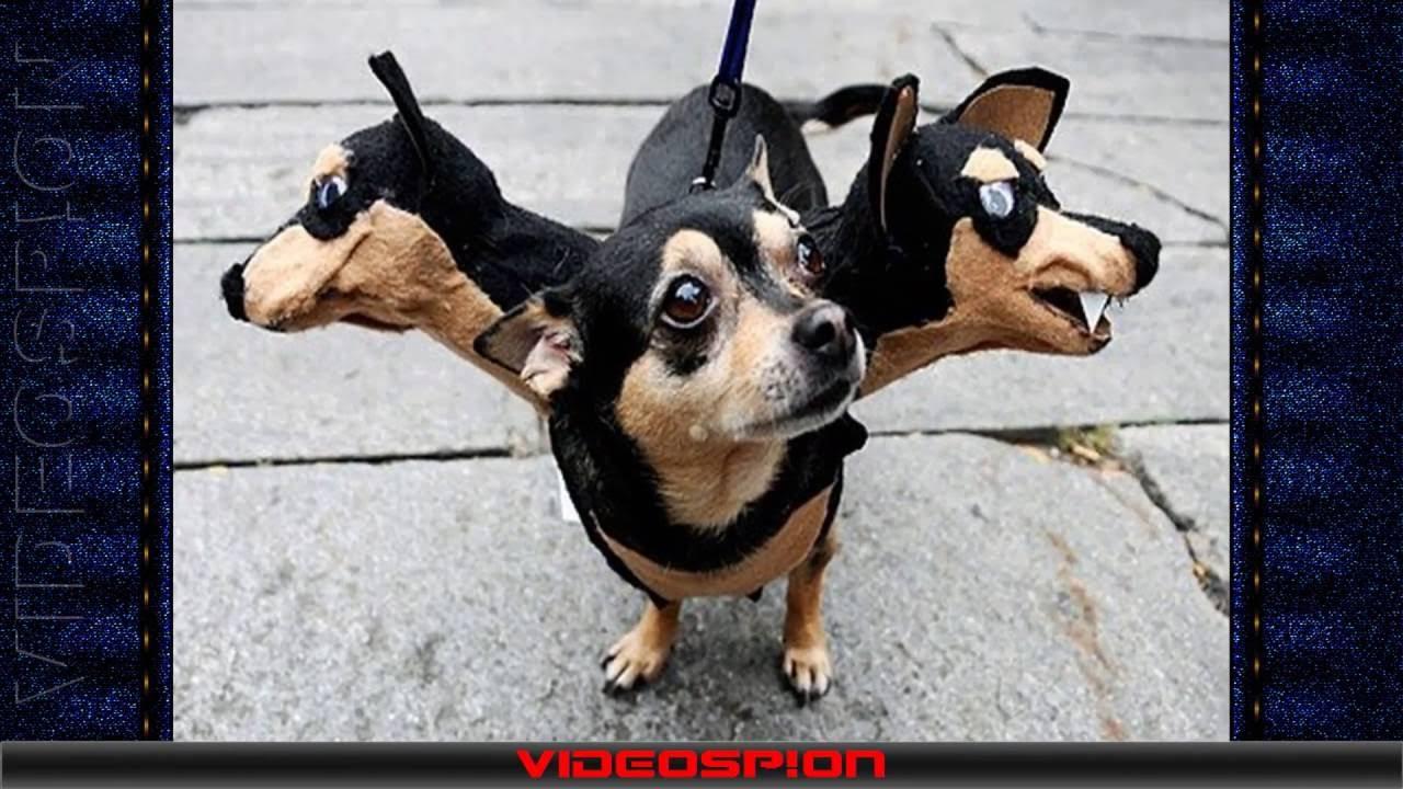 21 дек 2016. Такса зимний комбинезон с капюшоном труба. Который может служить как высокий воротник, так и в качестве капюшона, закрывая уши собаки. Комбинезон пошит на.