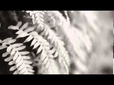 Short Fern In Saratoga 4k UHD Blowing in Wind