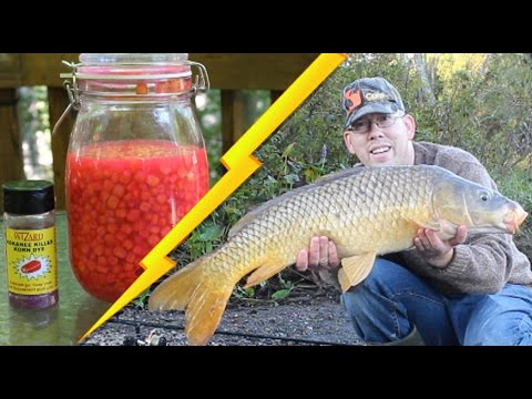 How to Catch Carp - Best Bait Recipe: Cured Corn
