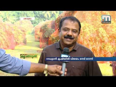 Reny Excels in Rambutan Farming   Mathrubhumi News