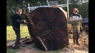 X2 Stihl ms 880 220cm vs big Redwood log