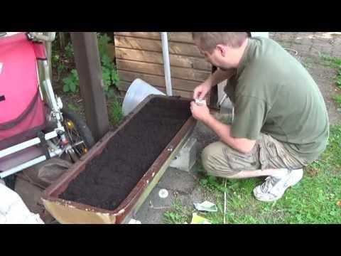 Kräuter Anpflanzen Im Garten