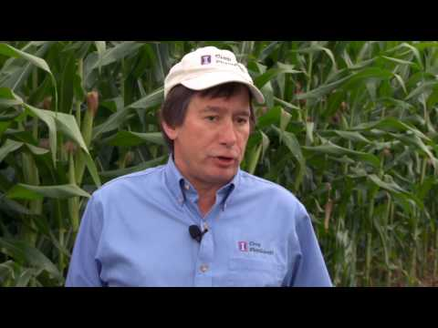 Ammonium Sulfate for High Yield Systems  Part One