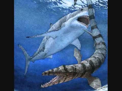 The Megalodon Shark  YouTube
