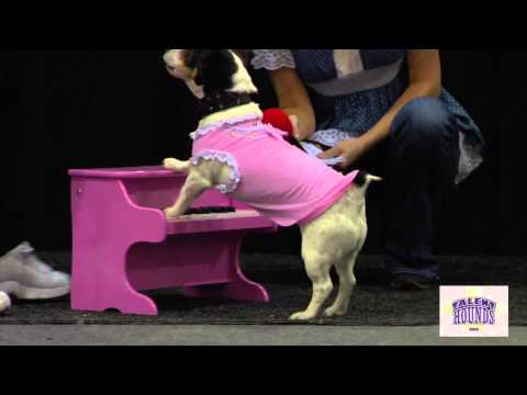 Amazing Dog Tricks at the All About Pets Fashion and Talent Show