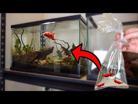 New RED *ONLY* INVERTS To DREAM BETTA FISH TANK AQUARIUM!