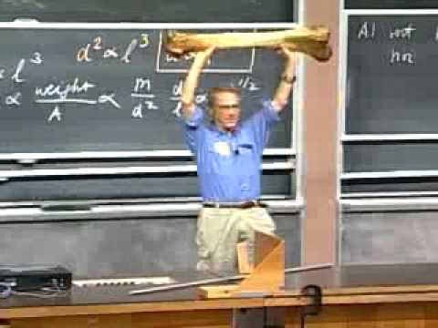 MIT Professor Walter Lewi's Physics 801 Lecture 1