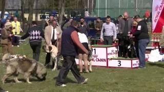 Sremska Mitrovica 29 marta 2015 - CAC izlozba pasa 1