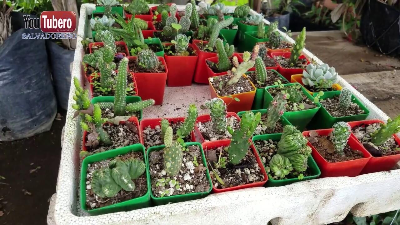 Como son los viveros de plantas en el salvador svl youtube for Viveros de plantas en buin