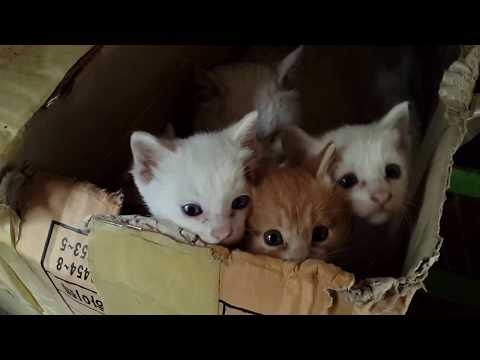 박스 안에서 태어난 귀여운 새끼 고양이 심쿵