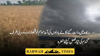 The weather in Rabwah is Pleasant and on the other hand the wheat crop is ready