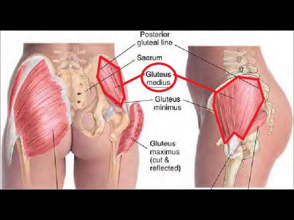 Buttocks Anatomy Video Project - YouTube