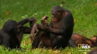 Про обезьян прикол