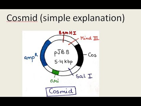 11- Cosmid Vector   ( In Hindi And English ) | For B.Sc. And M.Sc.