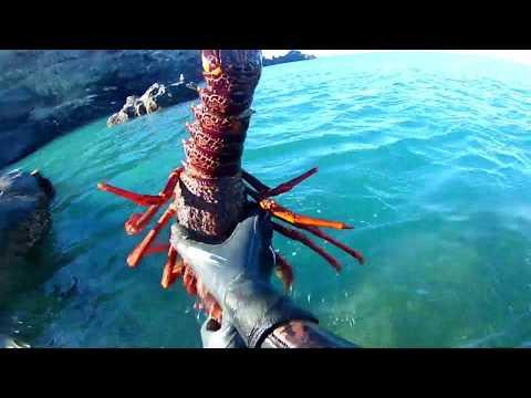 Summer Spearfishing Chch