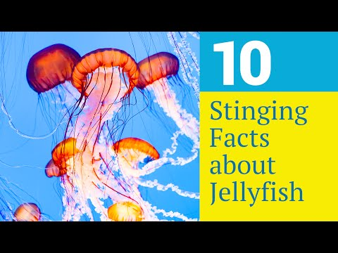 10 Stinging Facts About Jellyfish