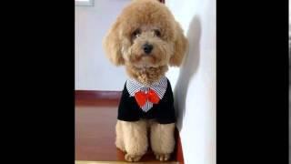 китайский сайт одежда для собак