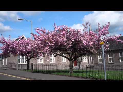 April Blossom Trees Scone Village Near Perth Perthshire Scotland