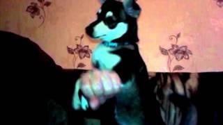 собака трахает руку!!РЖАЧ ДО СЛЕЗ!!!СМОТРЕТЬ ВСЕМ!!!!!!!!!