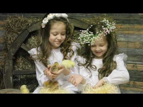 Пасхальные фотосессии с цыплятами