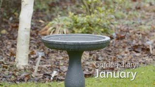 Garden Diary: January - Feed the birds, compost your Christmas tree and protect your plants