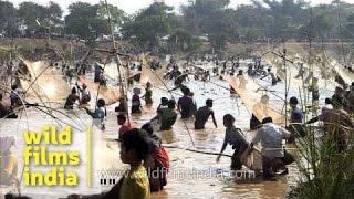 Assamese village community fishing (or plunder?) at Bhogali Bihu