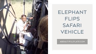 ELEPHANT FLIPS SAFARI VEHICLE | Okavango Delta, Botswana
