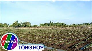THVL | Giải pháp phát triển bền vững nghề trồng khoai lang