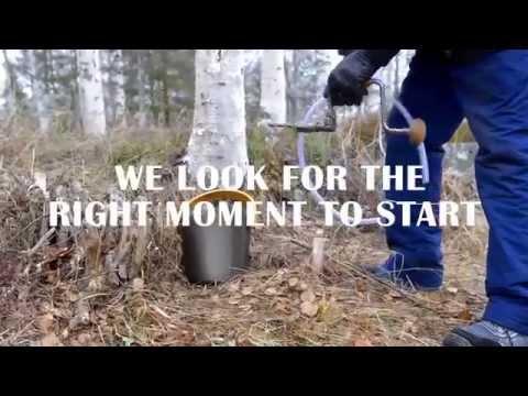 Linfabet® - Organic Birch sap