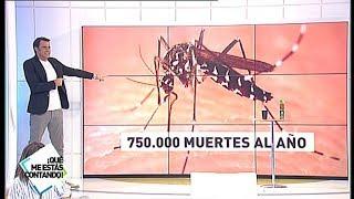 El mosquito tigre, causante de 750.000 muertes al año