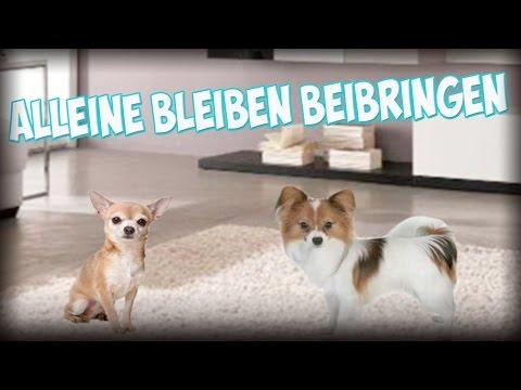 Dem Hund / Welpen das Alleine bleiben richtig beibringen! Tipps!