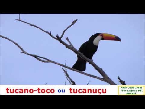 Видео Animais do filo cnidaria apresentam entre outras características